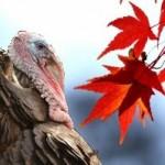 turkey autumn leaves